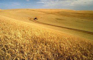 Champ de blé de l'Idaho, Etats-Unis (source : United States Department of Agriculture)
