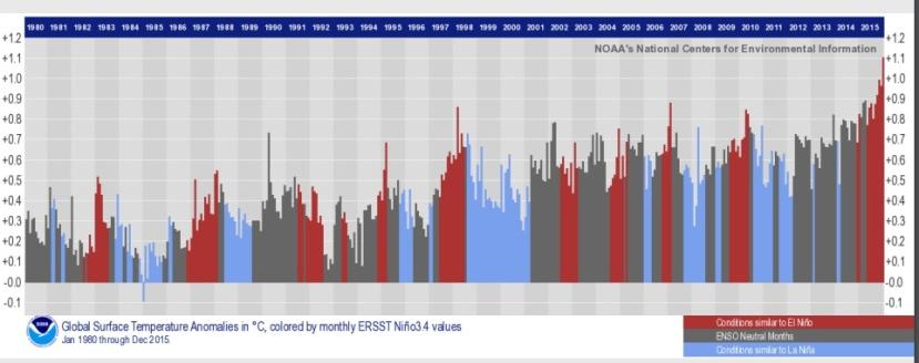 Evolution de la température mensuelle moyenne à la surface du globe depuis 1980. Les mois marqués par El Niño sont en rouge, les mois neutres en gris, les mois La Niña en bleu. Source : NOAA.