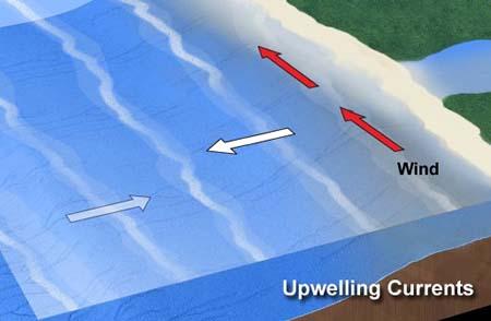 Remontée d'eau (upwelling) liée aux vents d'ouest. Les courants de surface se déplacent à la gauche des vents dans l'hémisphère Sud, donc vers le nord. Source : NOAA.