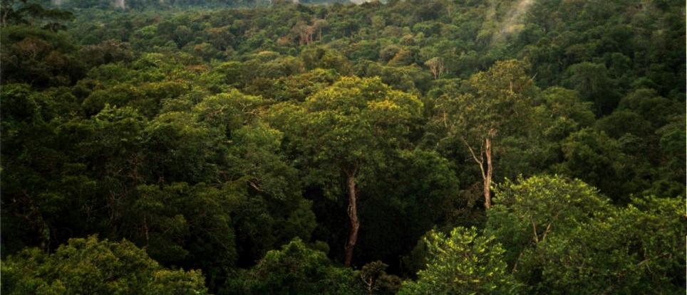 Inquiétudes pour le puits de carbone de l'Amazonie
